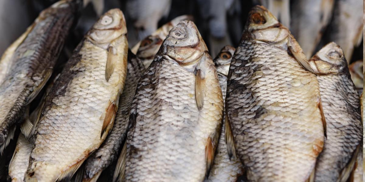 polza-vyalenoj-i-sushenoj-ryby